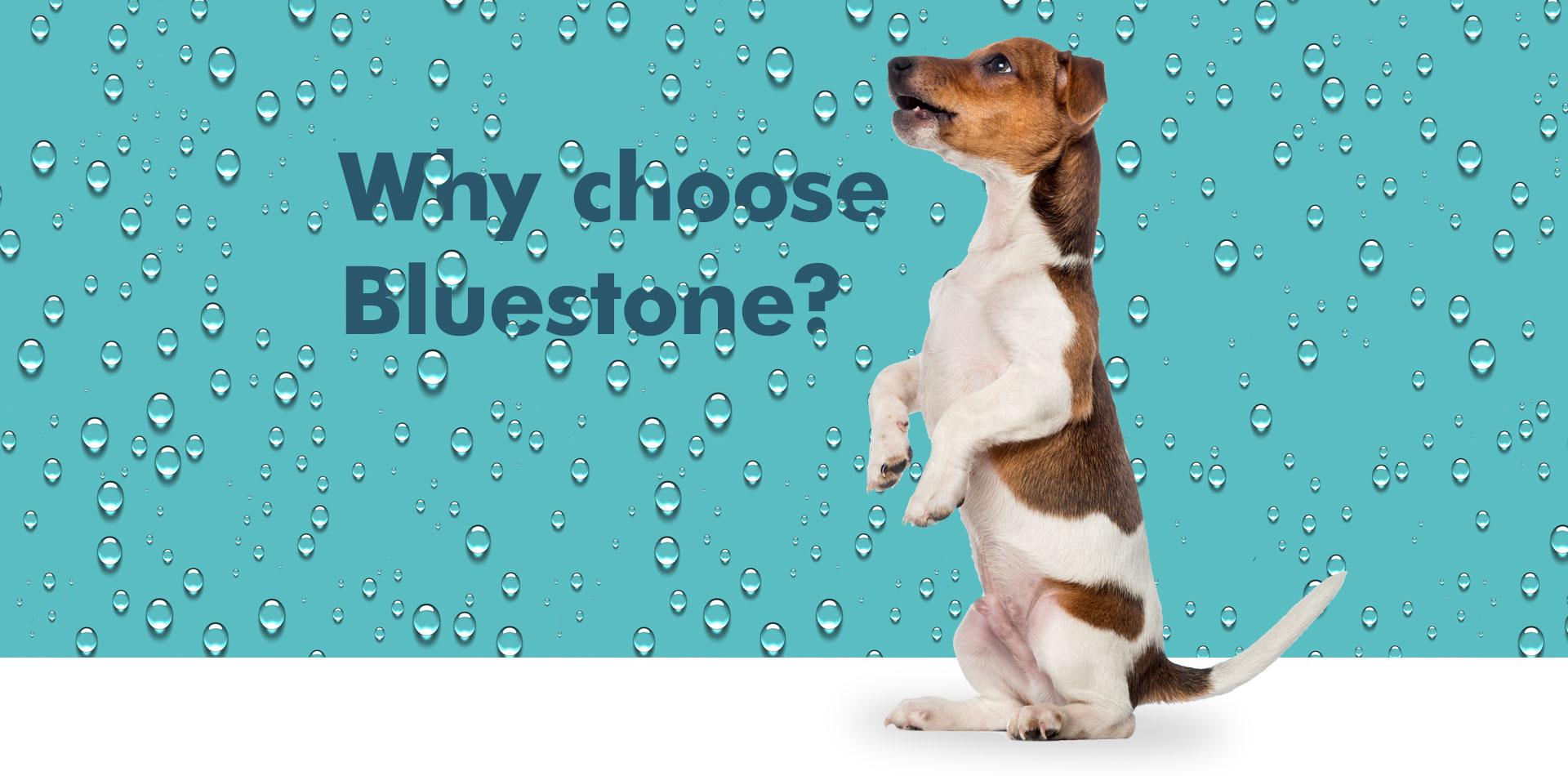 banner_WhyBluestone