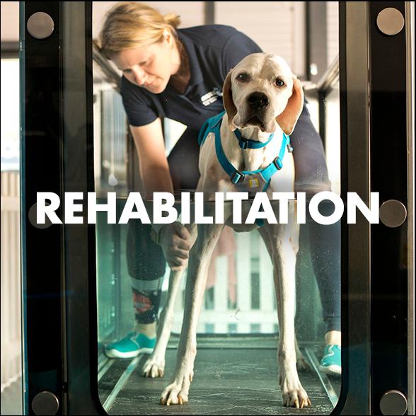 website Treadmill